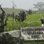 Lytton Springs old vines