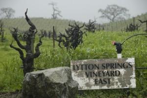 Lytton Springs old vines