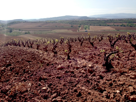 Rioja red clay