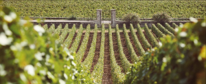 2014 proves a stellar vintage in Burgundy and Chablis