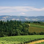 argyle-winery-view-sf13